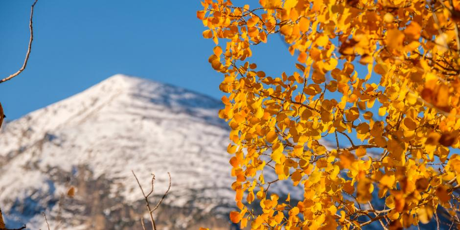 fall leaves in front of mountain tops
